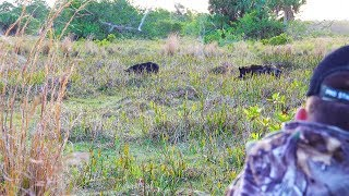 Download Giant Spotted Boar {Catch Clean Cook} 3 in 1! Video