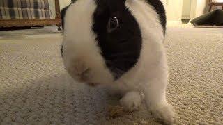 Download Rabbit scares himself! Video