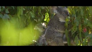 Download Explore Brisbane Video