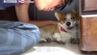 Download [連環泡]大大咻息8 Video