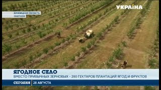 Download Село мечты: Село в Винницкой области получило второе дыхание благодаря ягодному бизнесу Video
