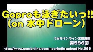 Download ゴープロだって泳ぎたいっ!【水中動画の定期更新No.586】 Video
