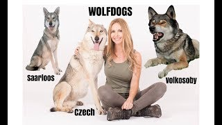 Download WOLFDOGS - WHICH ONE IS BEST? Video