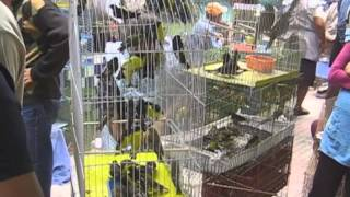 Download Feria de Tlacotepec de Benito Juárez, tlaco/ Video