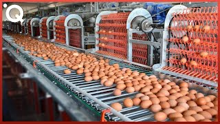 Download Food Industry Machines That Are At Another Level ▶7 Video