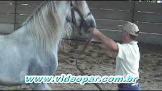 Download Doma De Cavalos Video