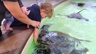 Download 👦Kid BIT by STINGRAY at SEAWORLD!🐬🐳🐋 Video