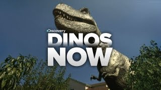 Download Dinos Invade Our World! Video