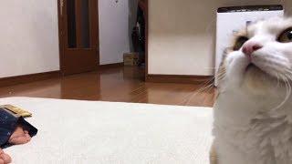Download トリミングから3か月でほぼ元に戻った猫 Video