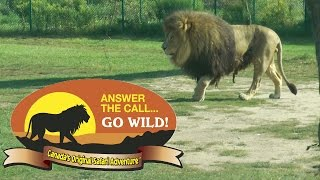 Download African Lion Safari Canada drive through zoo Video