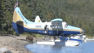 Download Journey to the Bears at Brooks River in Alaska Video