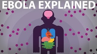 Download The Ebola Virus Explained — How Your Body Fights For Survival Video