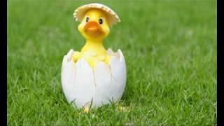 Download Fröhliche Ostern !!! Video