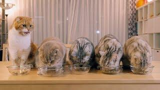 Download 4그릇을 먹는 대식냥은 누구? Video