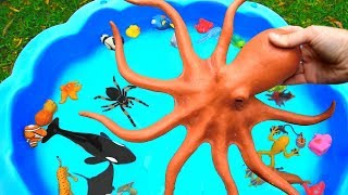 Download Learn Sea Animal and Wild Zoo Animals Names Learn Colors Video Toys For Kids Video