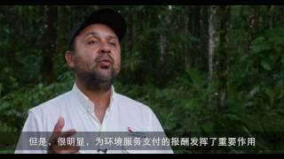 Download 恢复哥斯达黎加的森林 Video