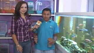 Download REPORTAJE ACUARIO COMO PASATIEMPO.mp4 Video