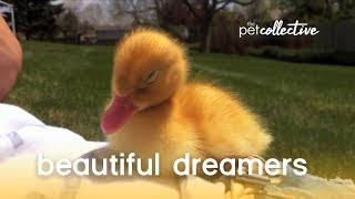 Download Beautiful Dreamers - Pet Edition | The Pet Collective Video