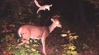Download funny trail cam photos Video