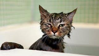 Download Приколы с котами ) Смешные коты и кошки Video