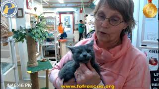 Download FFRC Adoption, Jacci officially adopts Bonnie on 4/13/2018 Video