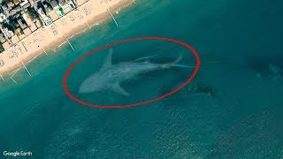 Download 7 Mysterious Deep Sea Creatures Spotted On Google Earth #2 Video