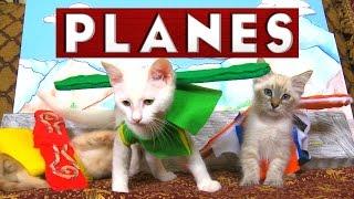 Download Disney's Planes (Cute Kitten Edition) Video