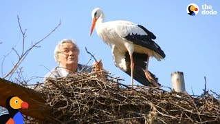 Download Man Does Everything For His Rescued Stork - KLEPETAN & MALENA | The Dodo Video
