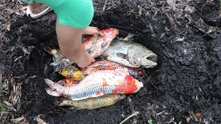 Download BURYING MY $25,000 DOLLAR FISH COLLECTION!! Video