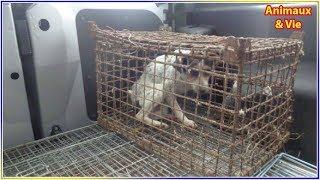 Download Ils trouvent une chienne enfermée dans une cage sale, en s'approchant ils voient un détail... Video