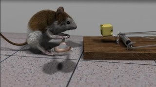 Download Blender 3D short animation ″Cheese″ Video