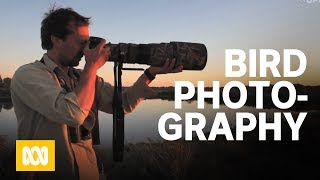 Download Henry Cook: Bird photography Video