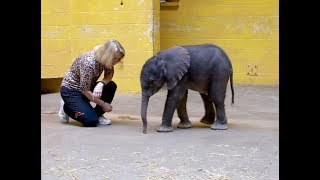 Download Baby elephant born early is being hand-raised at Pittsburgh Zoo Video