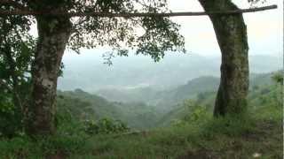 Download Costa Rica: líder en medio ambiente y biodiversidad Video