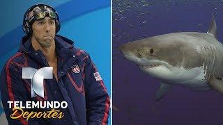 Download Michael Phelps nadó frente a un tiburón enorme. ¿Le ganó?   ¿Sabías qué...?   Telemundo Deportes Video
