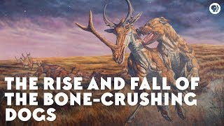 Download The Rise and Fall of the Bone-Crushing Dogs Video
