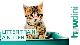Download How to Litter Train a Kitten: Litter Training a Cat Video