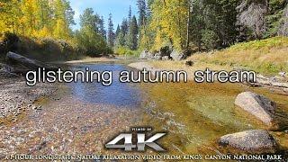 Download Amazing 4K Scene: Glistening Autumn Stream 1 HR Nature Relaxation Static Scene in UHD Video