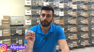 Download Ekgelir ve Ticaret / Muhabbet Kuşu Üreterek Para Kazanmak Video