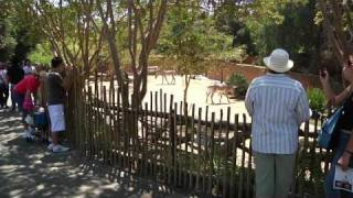 Download Brief Tour Of Los Angeles Zoo Video