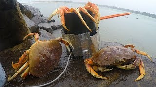 Download Catch n' Boil Crabs on a Beach in a Rainstorm! Video