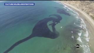 Download Millions of Sardines Cloud San Diego Coast Video