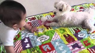 Download 赤ちゃんにお気に入りのボールを貸してあげる犬 Video