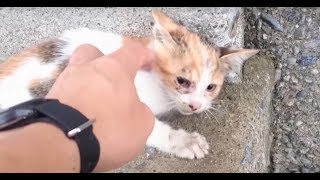 Download Man Saw Kitten Fall From Bridge And Rushed To Save Her Video