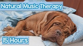 Download How to Calm My Dog? Pet Therapy Music to reduce Puppy Anxiety - Helped 4 million dogs ( New 2018) 🐕💤 Video