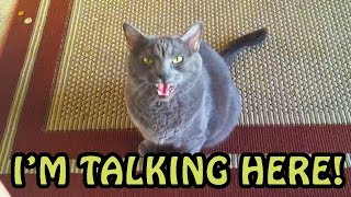 Download Cats Talking With Their Humans Compilation 2018 [NEW] Video