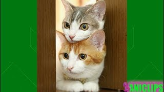 Download Funny Cats Compilation 2018 - Best Cat Videos of The Year 2018 Video