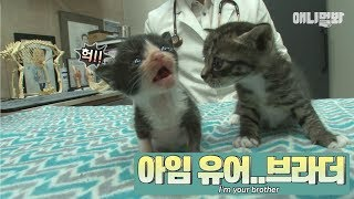 Download The kitten has finally met its mom! but she is found with another kitten..? Video