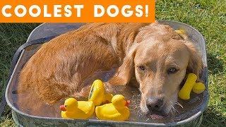 Download Dog Days of Summer Coolest Dogs of 2018 | Funny Pet Videos Video
