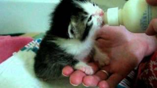 Download Austin Pets Alive! - Super Cute! Wilbrina on the bottle Video